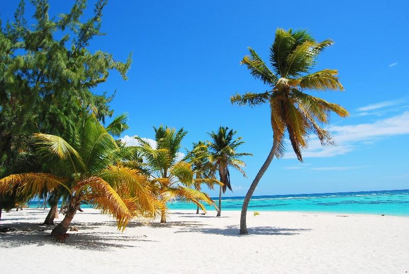 Caribe Tours Samana Santo Domingo