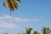 E' tornato il sole! Voliamo a Cuba Messico solo ritorno da Santo Domingo